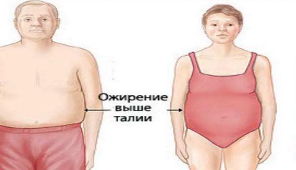 наш организм откладывает жир «про запас», в основном в центральной части – вокруг талии и на животе