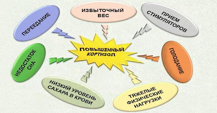 много катаболического гормона кортизола