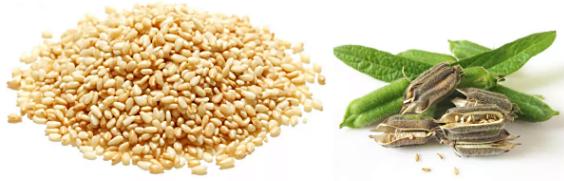 характеристика семян кунжута